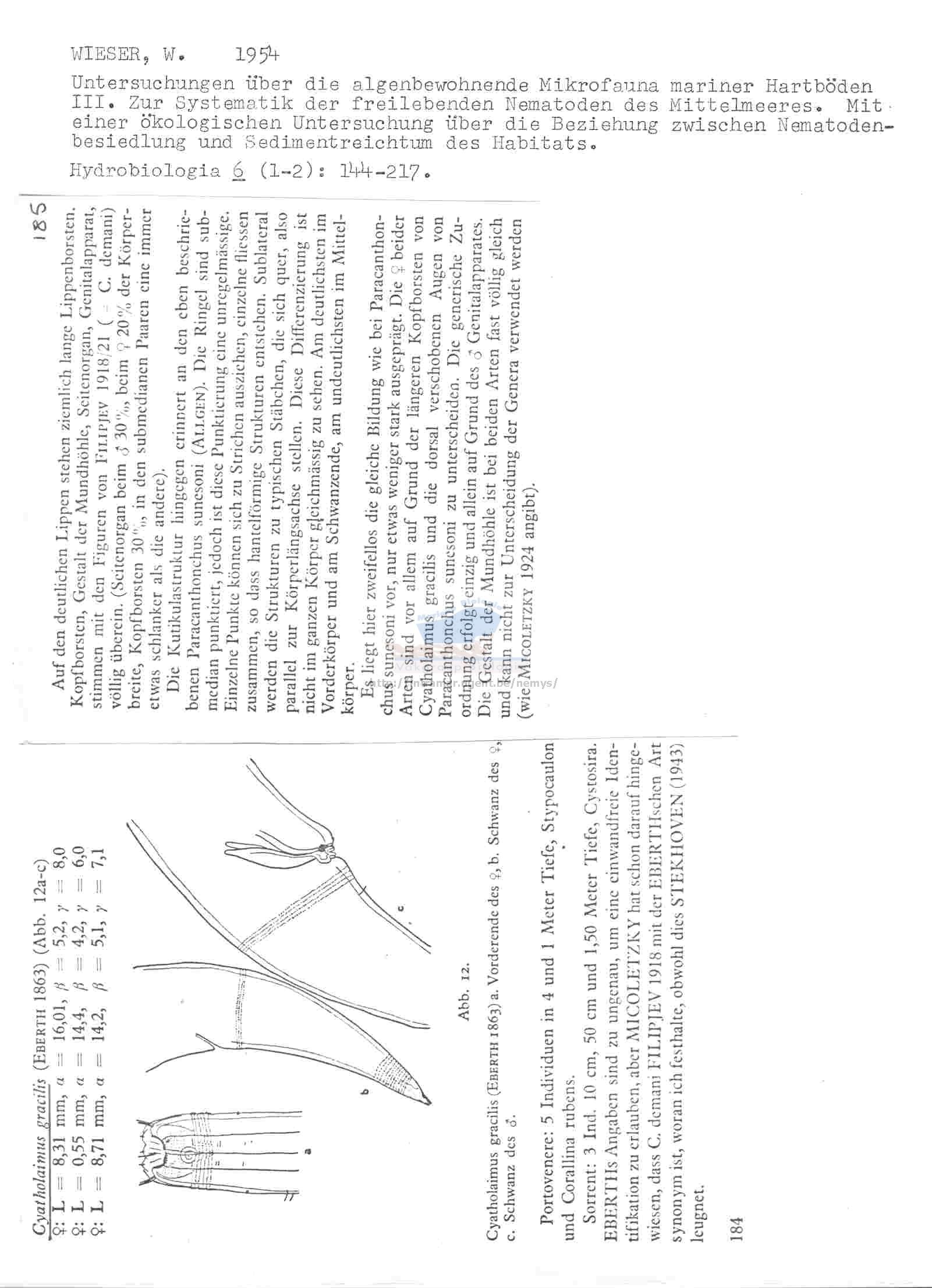WoRMS - World Register of Marine Species - Photogallery