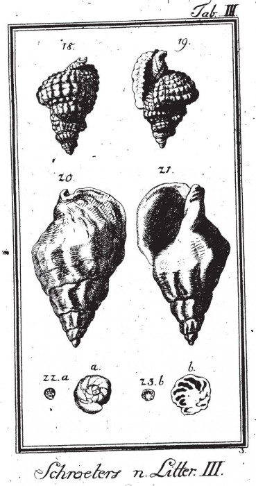 Serpula nautiloides Plate 3, fig. 22-23 in Schröter, 1786