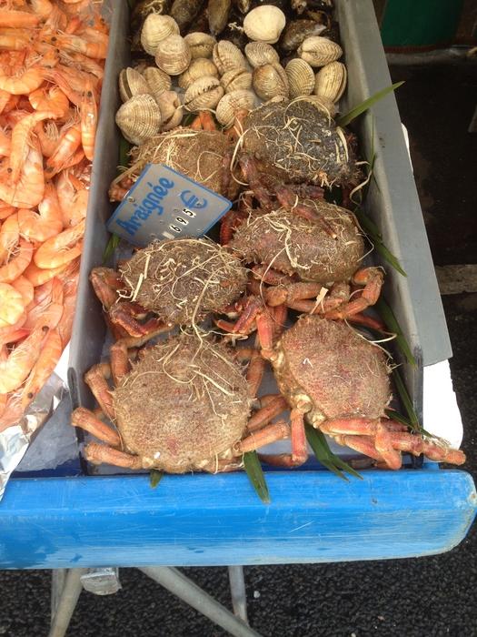 Atlantic spider crab