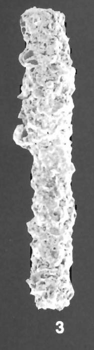 Rhabdammina scabra Hoglund identified specimen