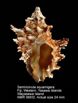 Semiricinula squamigera
