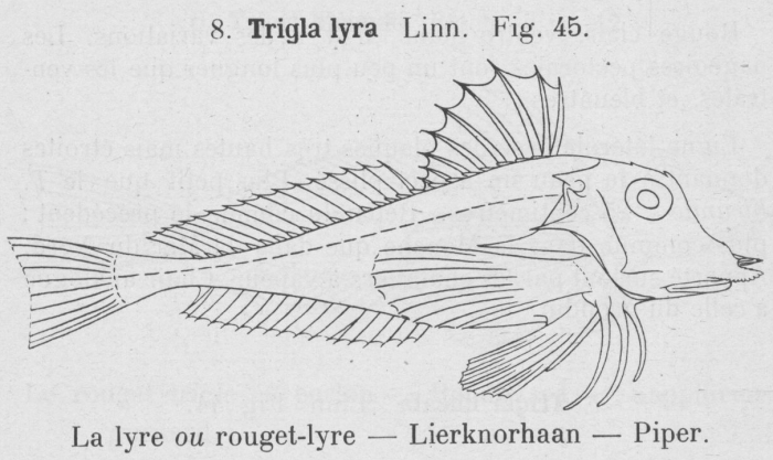 Gilson (1921, fig. 45)