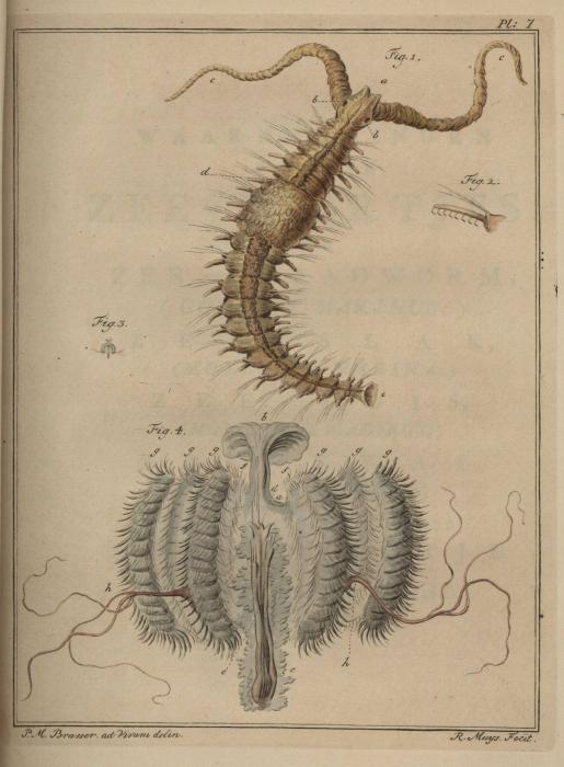 Slabber (1778, pl. 07)