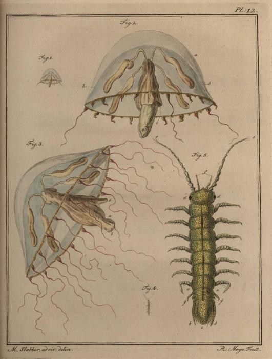 Slabber (1778, pl. 12)