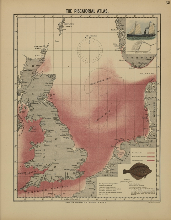 Olsen (1883, map 39)