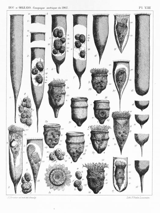Meunier (1910, pl. 08)