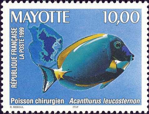 Acanthurus leucosternon