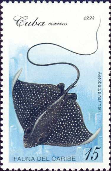 Aetobatus narinari