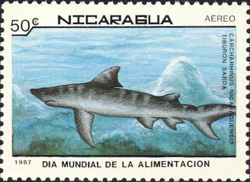 Carcharhinus nicaraguensis