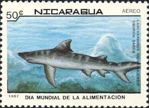 Carcharhinus nicaraguensis
