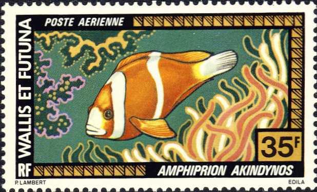 Amphiprion akindynos