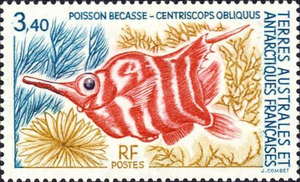Centriscops obliquus
