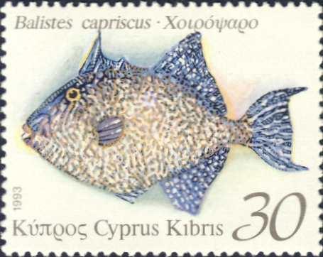 Balistes capriscus