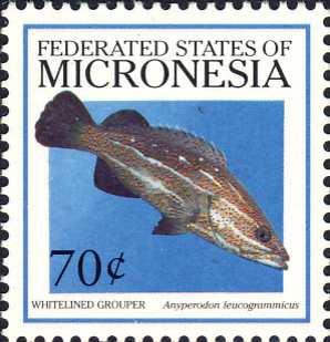 Anyperodon leucogrammicus