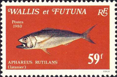 Aphareus rutilans