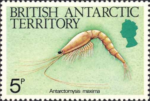 Antarctomysis maxima