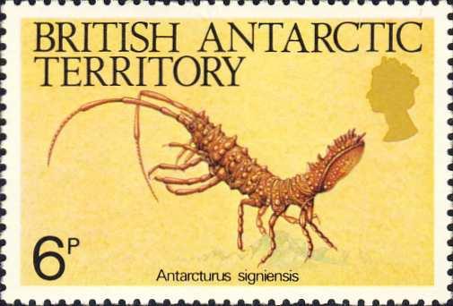 Antarcturus signiensis
