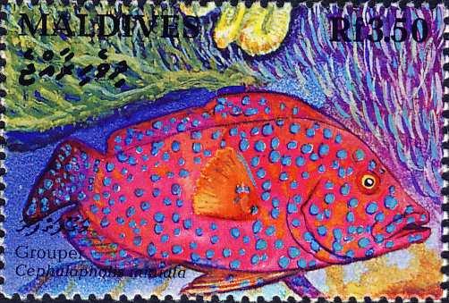 Cephalopholis miniata