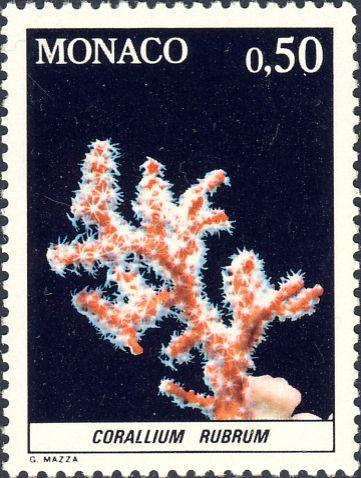Corallium rubrum