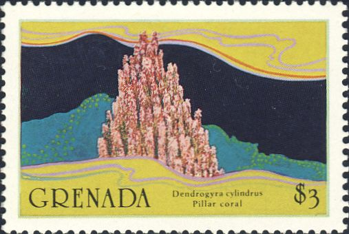 Dendrogyra cylindrus