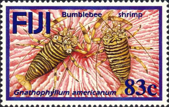Gnathophyllum americanum