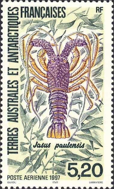 Jasus paulensis
