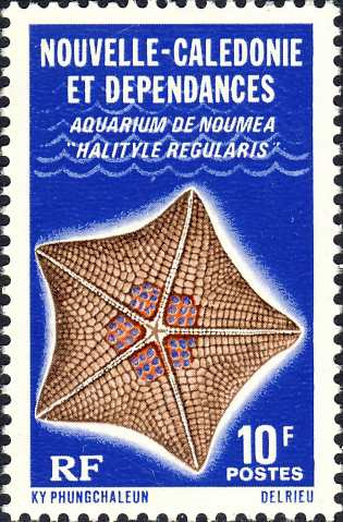 Halityle regularis
