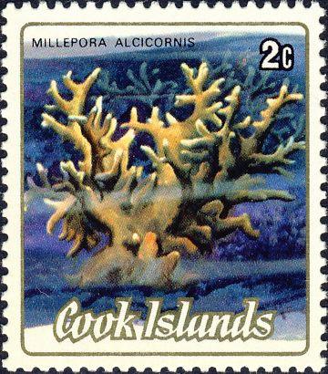 Millepora alcicornis