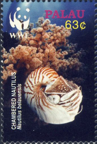 Nautilus belauensis
