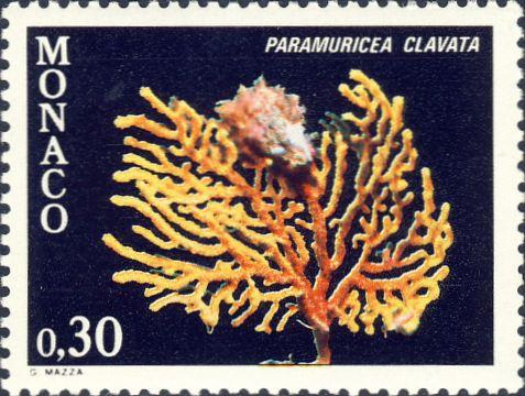 Paramuricea clavata