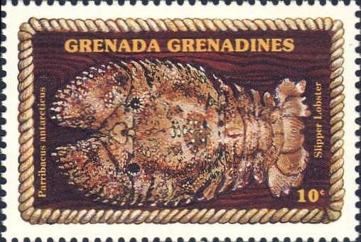 Parribacus antarcticus