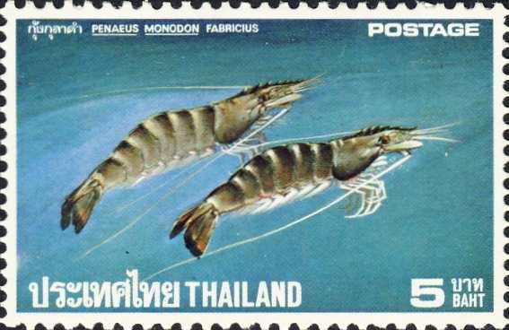 Penaeus monodon