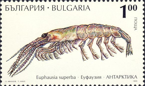 Euphausia superba