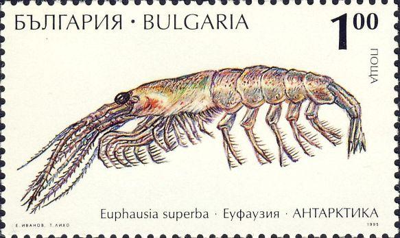 Euphausia superba