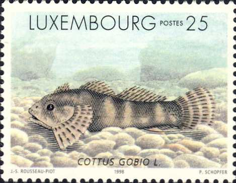 Cottus gobio