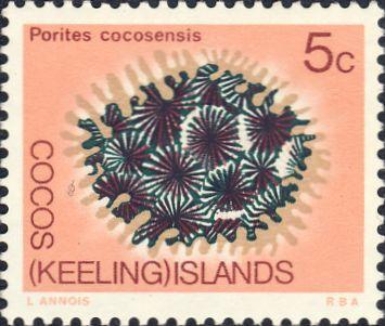 Porites cocosensis