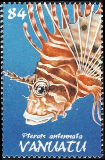 Pterois antennata