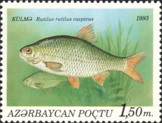 Rutilus rutilus caspicus