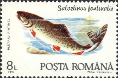 Salvelinus fontinalis