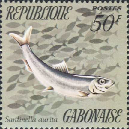 Sardinella aurita