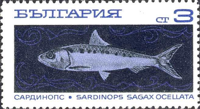 Sardinops sagax