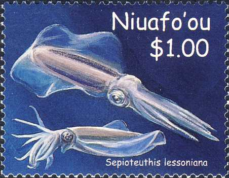 Sepioteuthis lessoniana