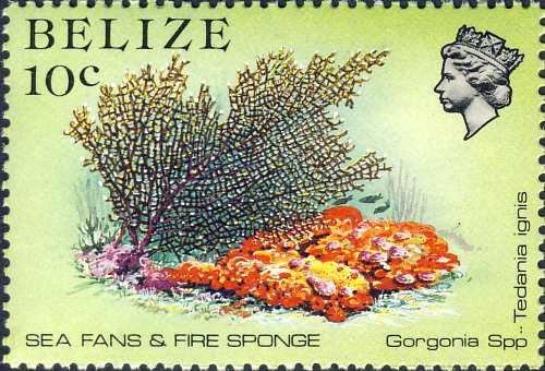 Tedania (Tedania) ignis & Gorgonia sp.