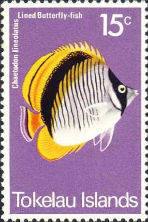 Chaetodon lineolatus