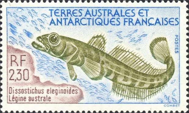Dissostichus eleginoides