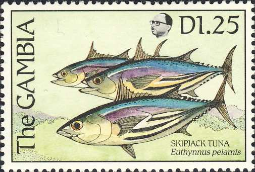Euthynnus pelamis