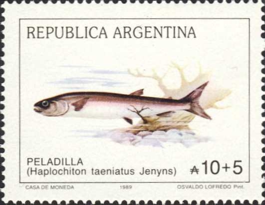 Aplochiton taeniatus