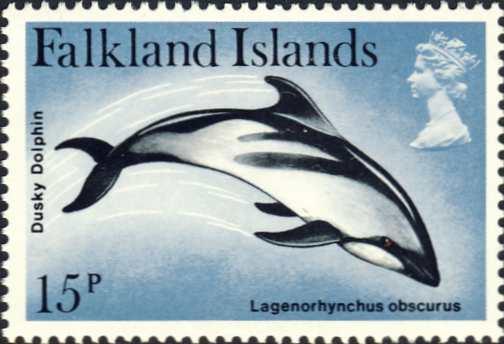 Lagenorhynchus obscurus