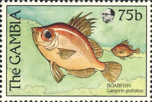 Lampris guttatus