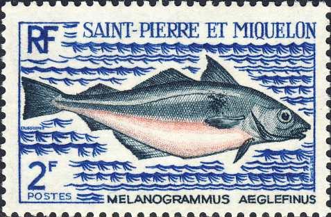 Melanogrammus aeglefinus